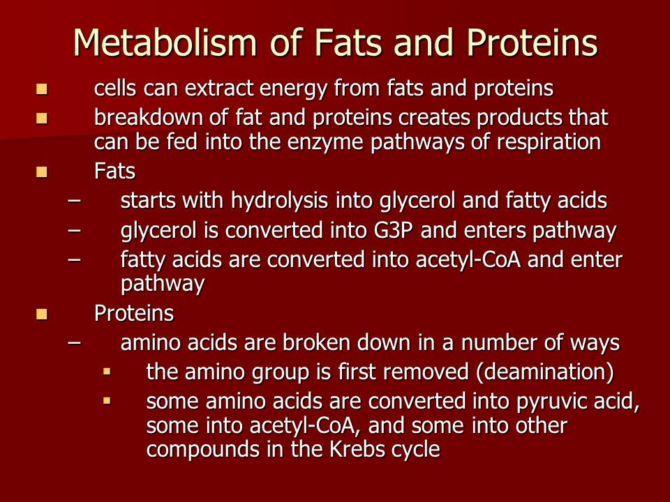 Metabolism of Fats and Proteins