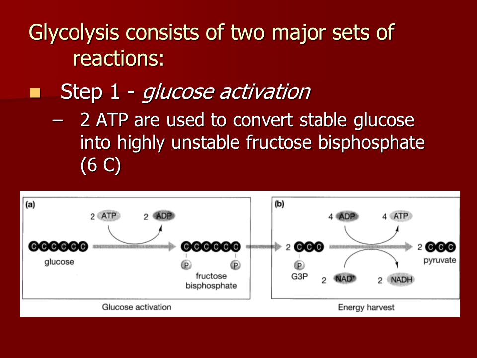 Glycolysis consists of two major sets of reactions: