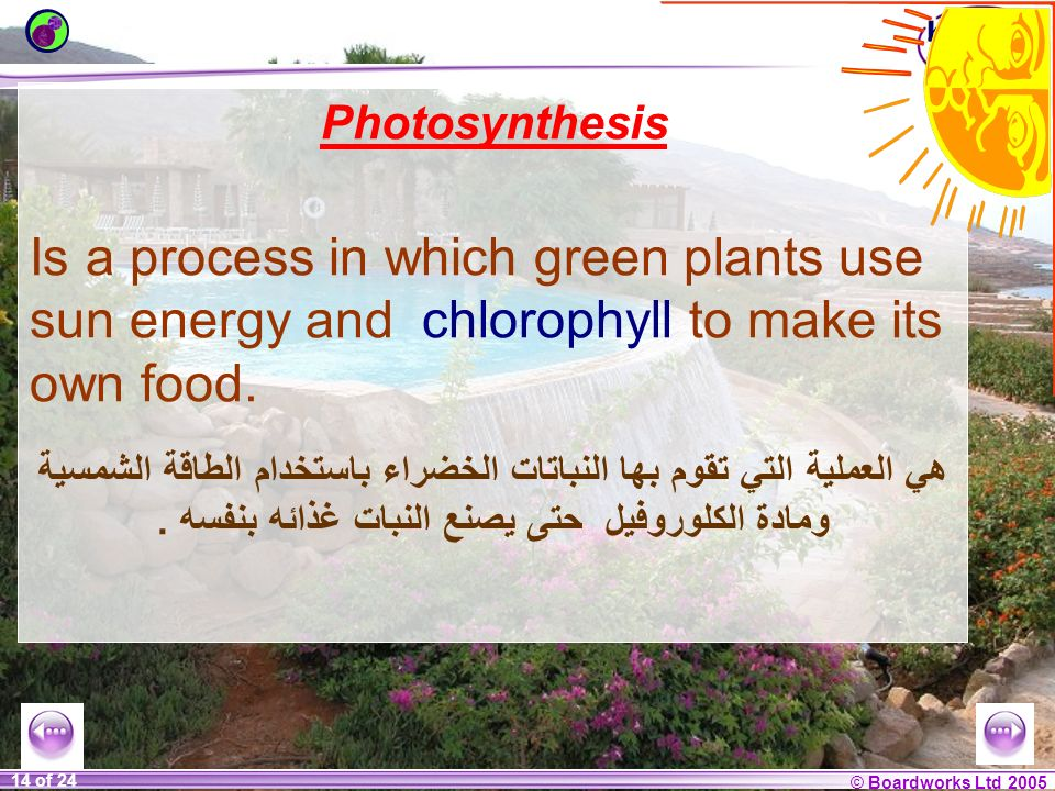 PhotosynthesisIs a process in which green plants use sun energy and chlorophyll to make its own food.