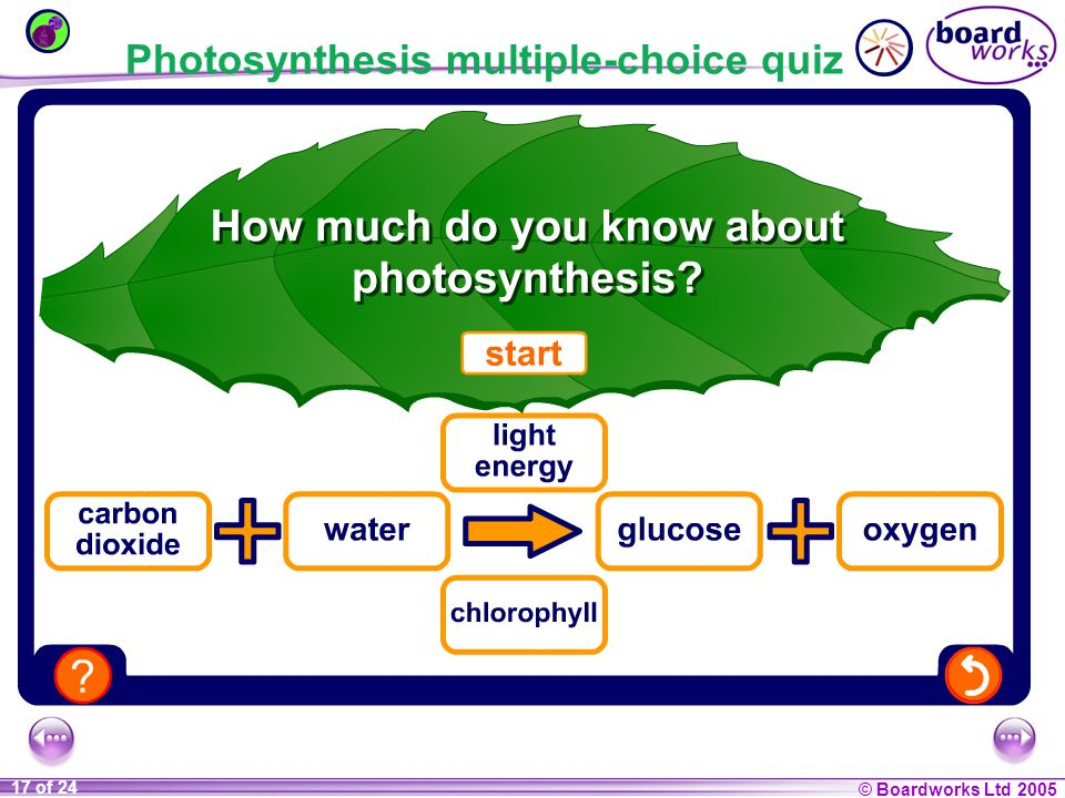 Photosynthesis multiple-choice quiz