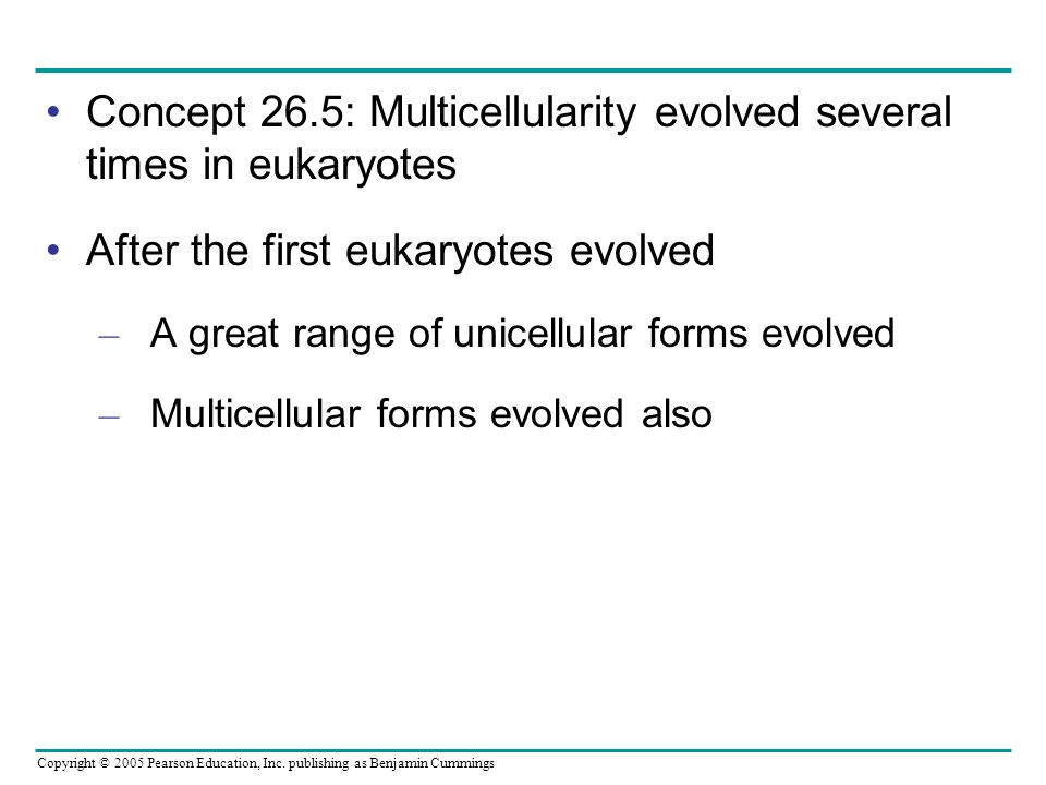 Concept 26.5: Multicellularity evolved several times in eukaryotes