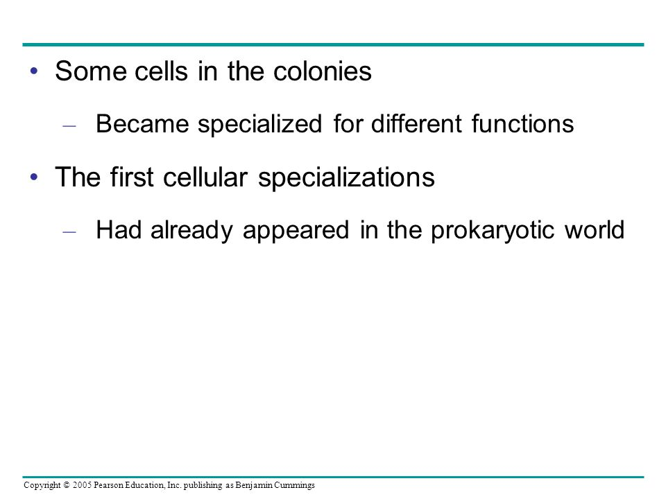 Some cells in the colonies