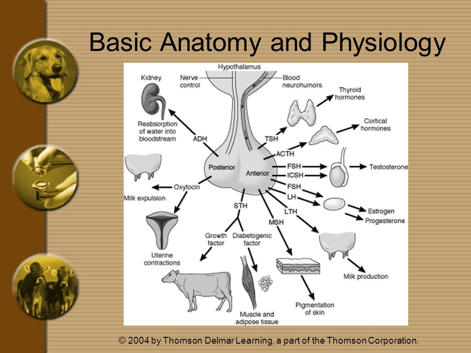 Basic Anatomy and Physiology