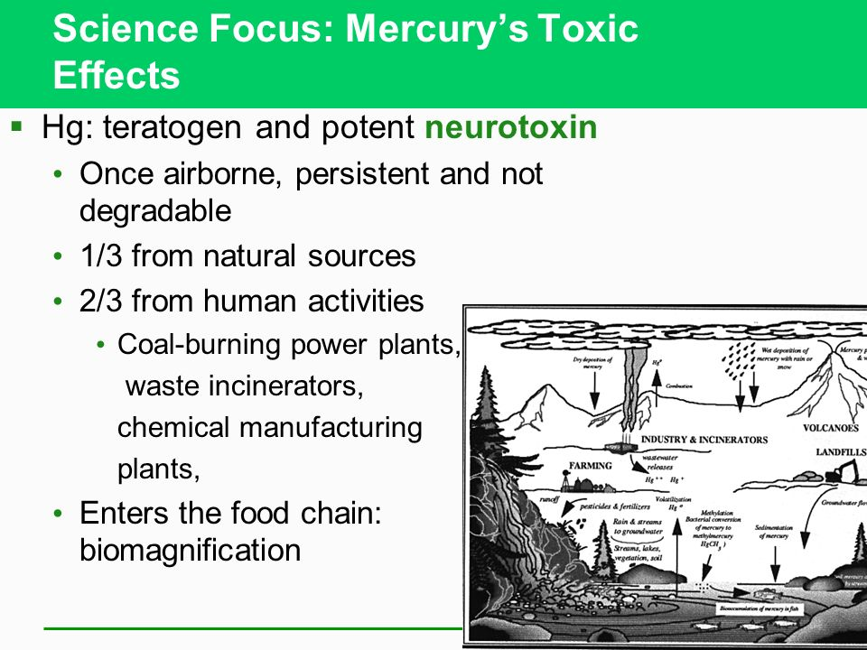 Science Focus: Mercury's Toxic Effects