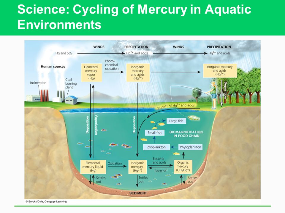 Science: Cycling of Mercury in Aquatic Environments