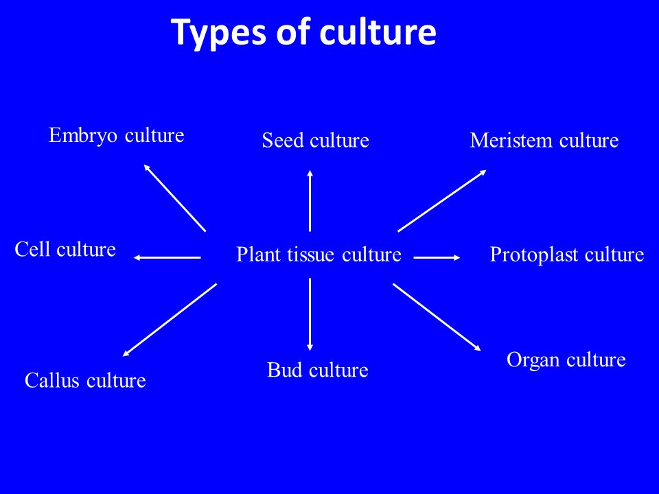 Types of culture Embryo culture Seed culture Meristem culture