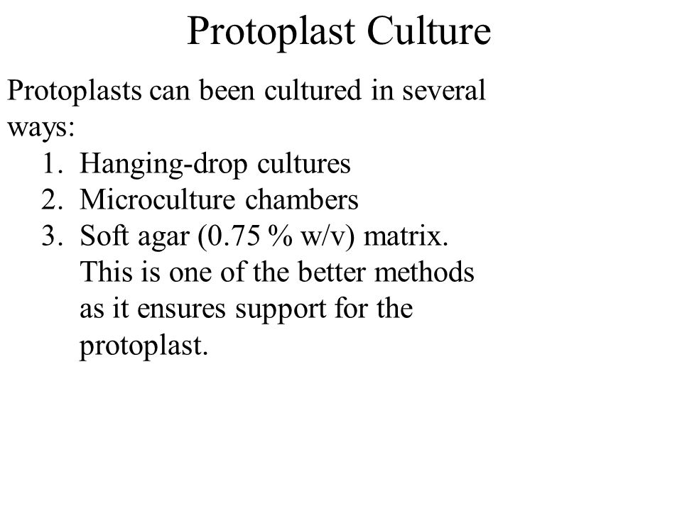 Protoplast Culture Protoplasts can been cultured in several ways: