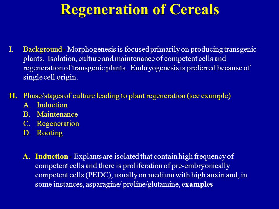 Regeneration of Cereals
