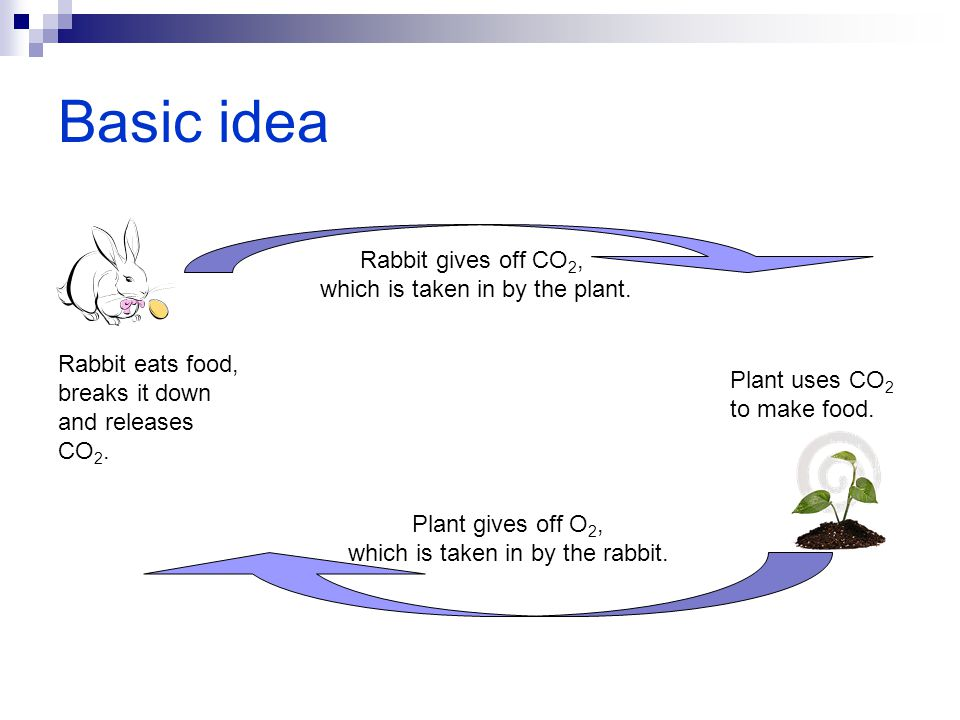 Basic idea Rabbit gives off CO2, which is taken in by the plant.