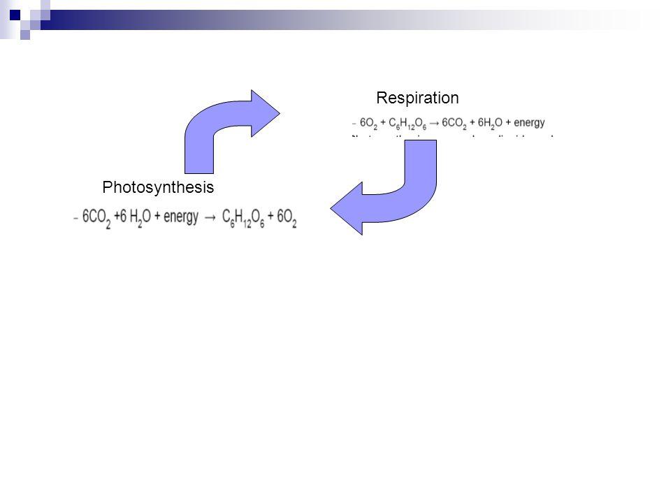 Respiration Photosynthesis