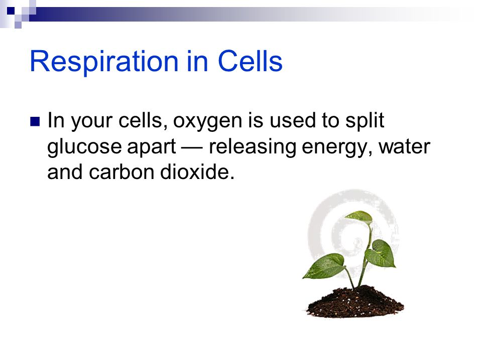 Respiration in Cells In your cells, oxygen is used to split glucose apart — releasing energy, water and carbon dioxide.