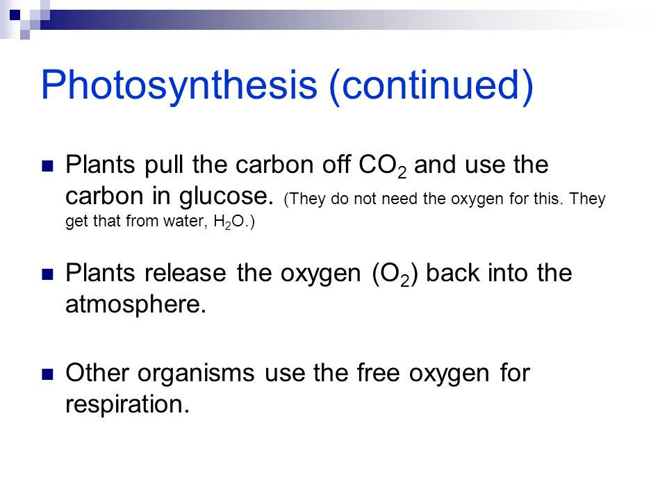 Photosynthesis (continued)