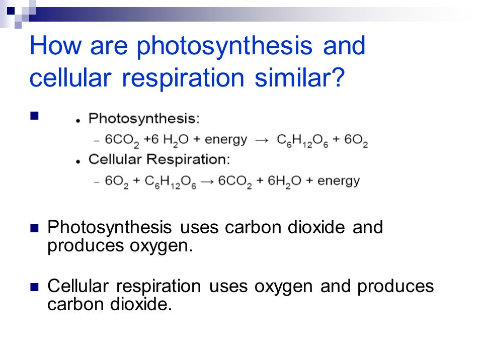 How are photosynthesis and cellular respiration similar