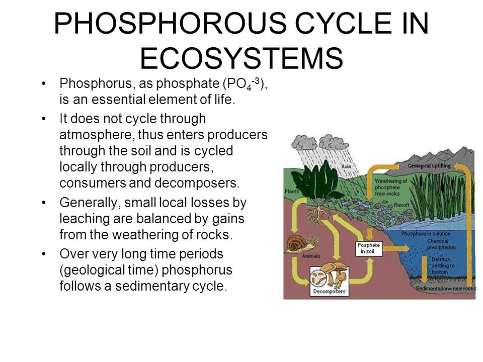 PHOSPHOROUS CYCLE IN ECOSYSTEMS