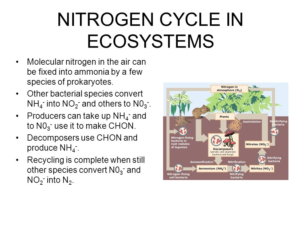 NITROGEN CYCLE IN ECOSYSTEMS
