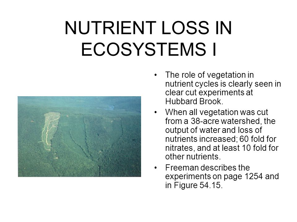 NUTRIENT LOSS IN ECOSYSTEMS I