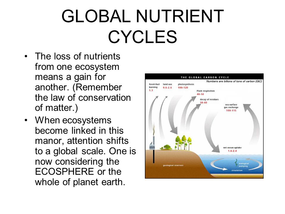 GLOBAL NUTRIENT CYCLES