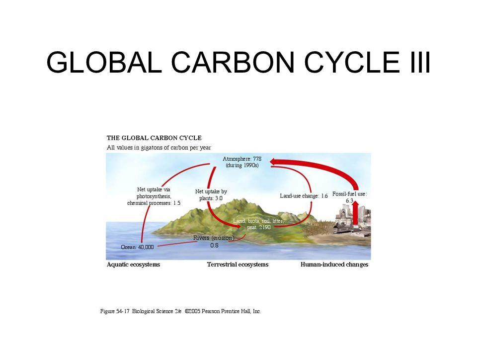 GLOBAL CARBON CYCLE III