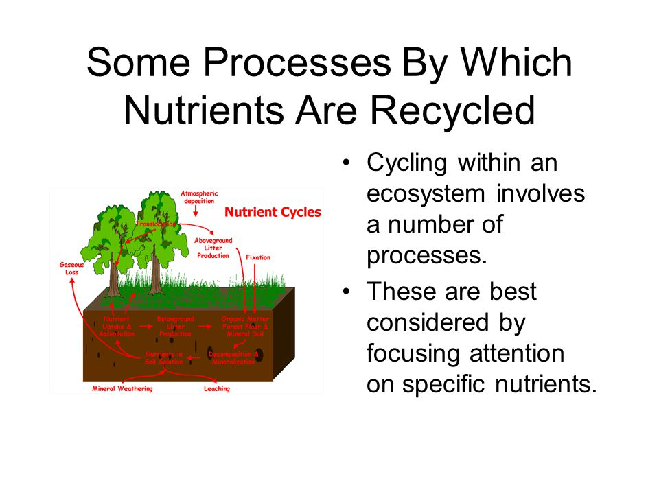 Some Processes By Which Nutrients Are Recycled