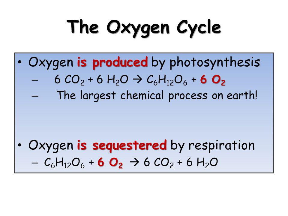 The Oxygen Cycle Oxygen is produced by photosynthesis