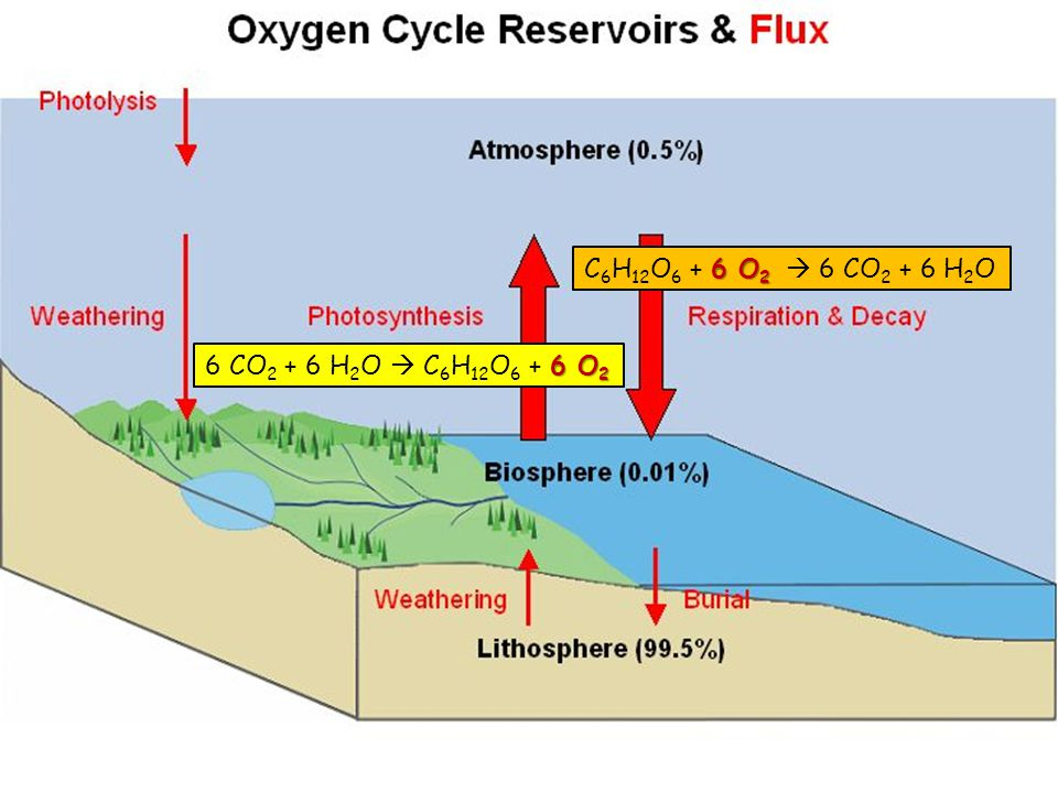 water carbon nitrogen oxygen and phosphorus ppt video