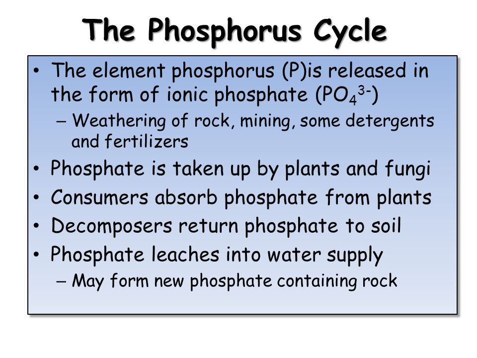 The Phosphorus Cycle The element phosphorus (P)is released in the form of ionic phosphate (PO43-)