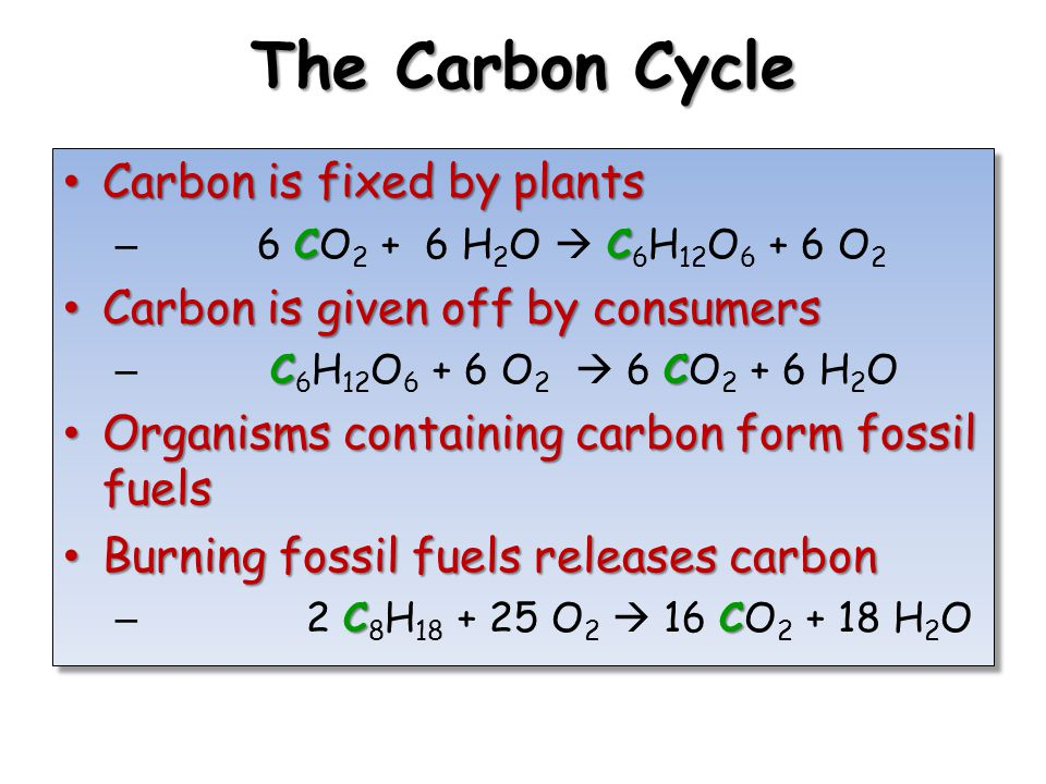 The Carbon Cycle Carbon is fixed by plants