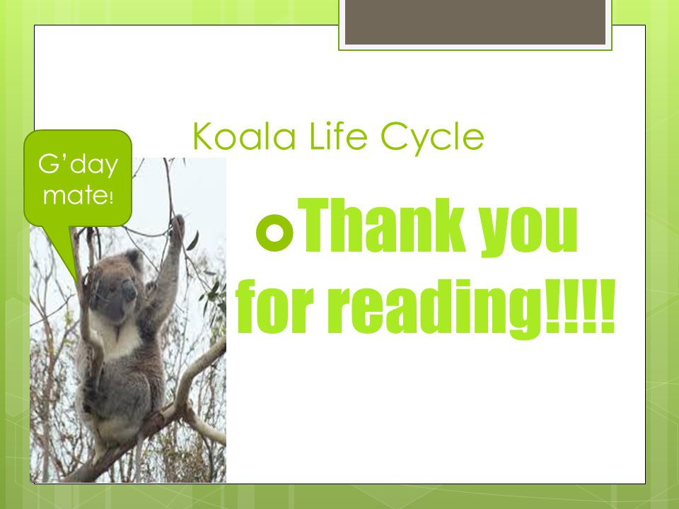 Koala Life Cycle G'day mate! Thank you for reading!!!!