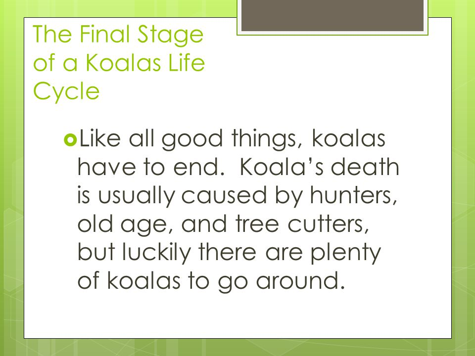 The Final Stage of a Koalas Life Cycle