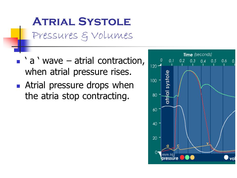 Atrial Systole Pressures & Volumes
