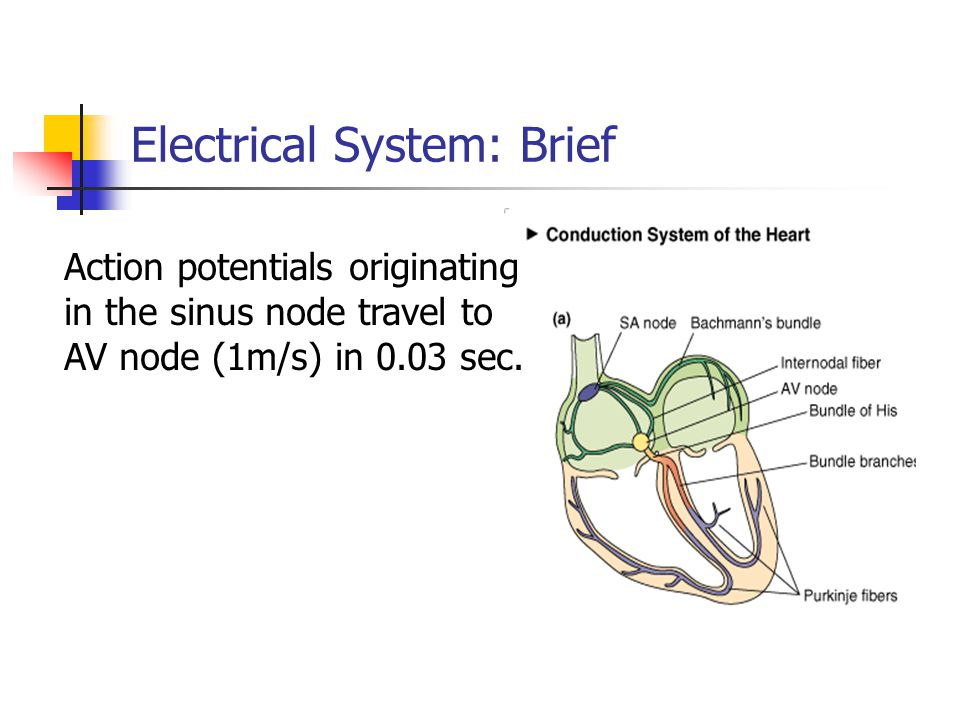 Electrical System: Brief
