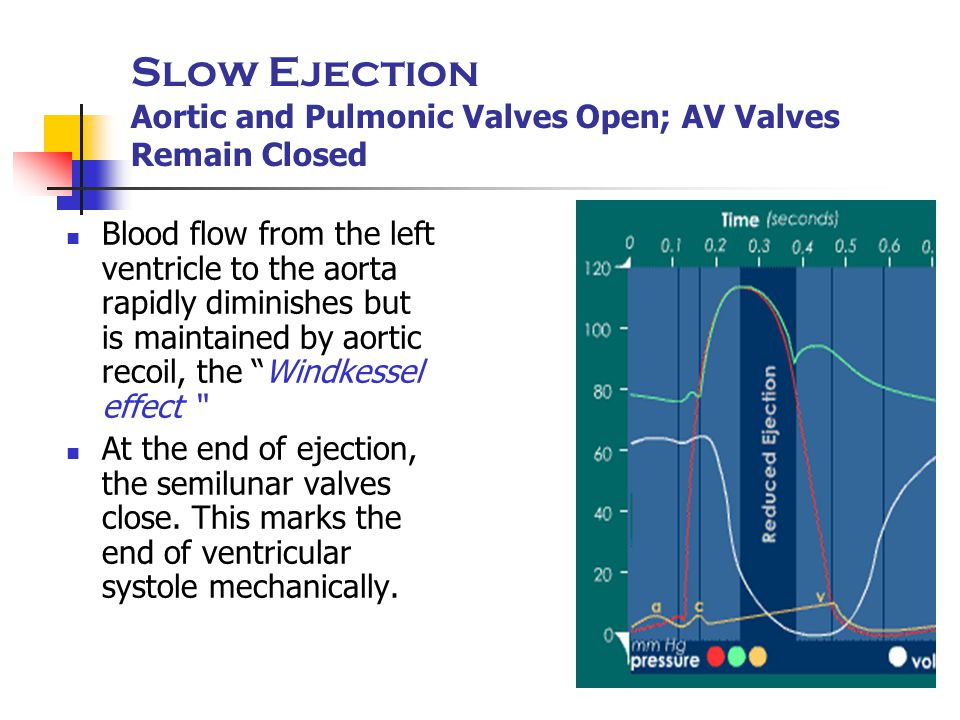 Slow Ejection Aortic and Pulmonic Valves Open; AV Valves Remain Closed