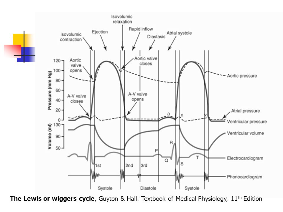 The Lewis or wiggers cycle, Guyton & Hall