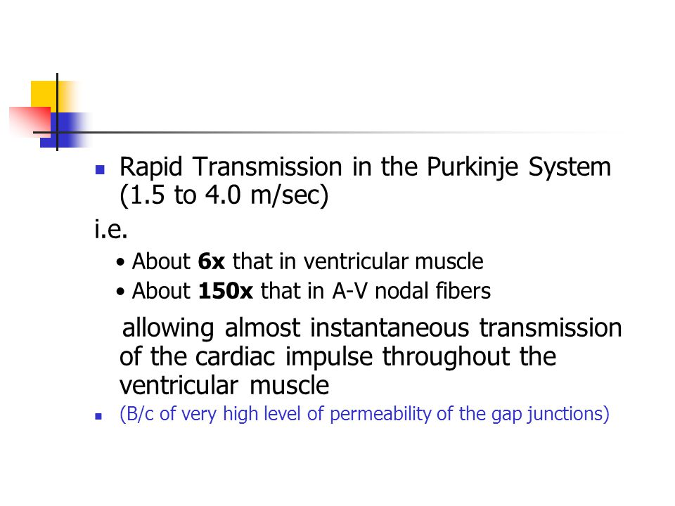 Rapid Transmission in the Purkinje System (1.5 to 4.0 m/sec)