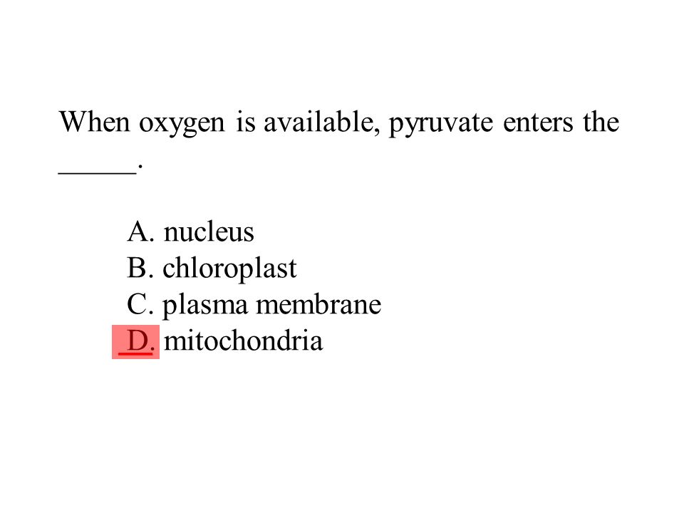 When oxygen is available, pyruvate enters the _____. A. nucleus B