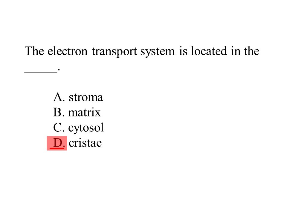The electron transport system is located in the _____. A. stroma B
