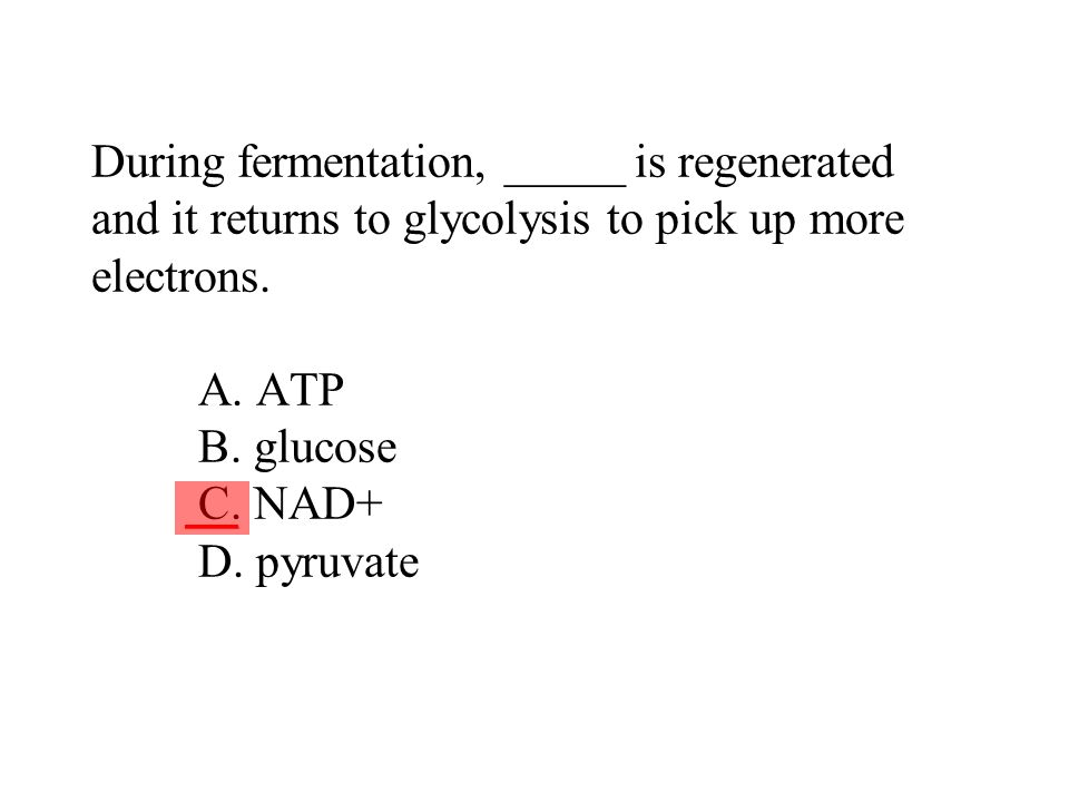 During fermentation, _____ is regenerated and it returns to glycolysis to pick up more electrons. A. ATP B. glucose C. NAD+ D. pyruvate