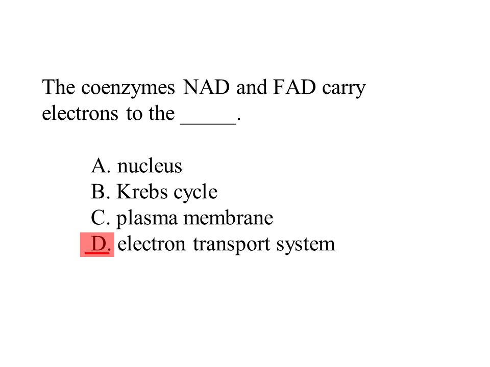The coenzymes NAD and FAD carry electrons to the _____. A. nucleus B