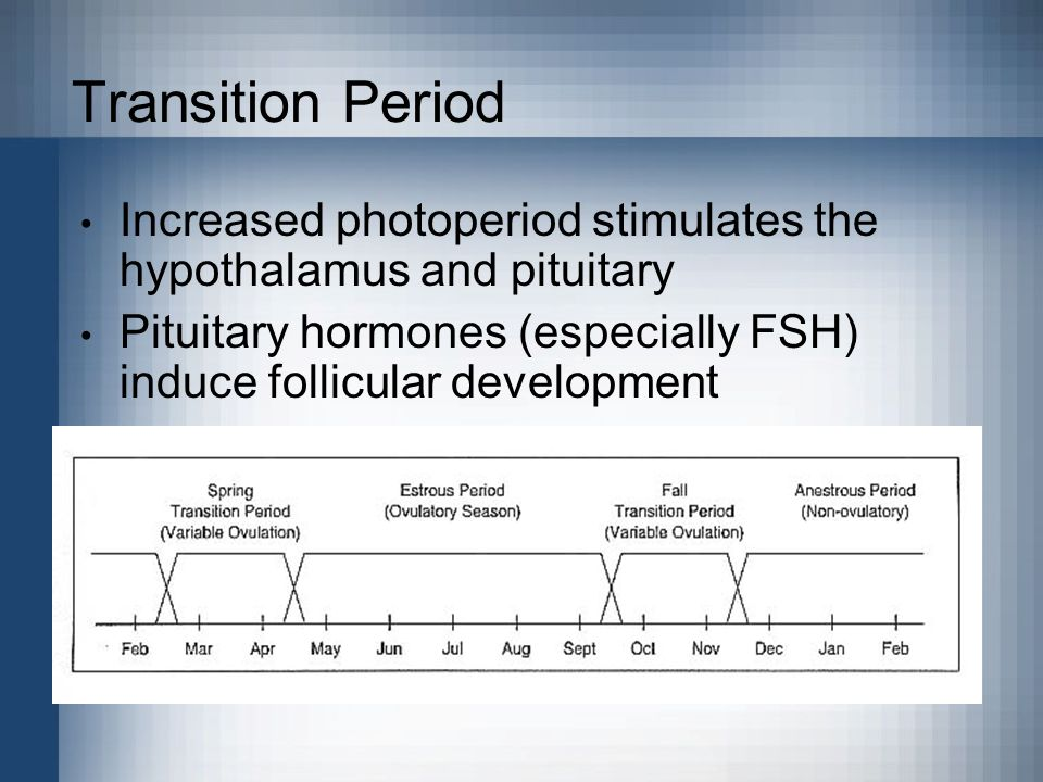 Transition Period Increased photoperiod stimulates the hypothalamus and pituitary.