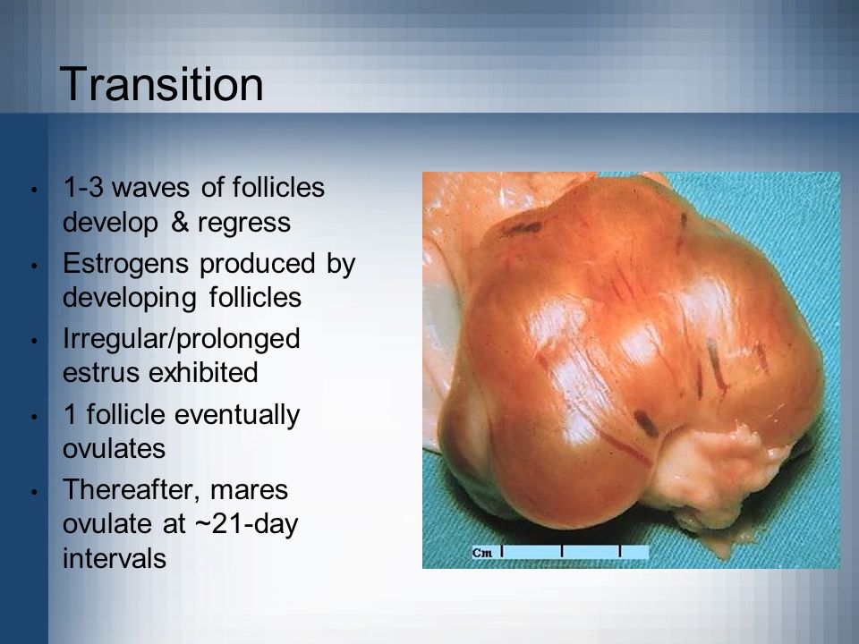 Transition 1-3 waves of follicles develop & regress