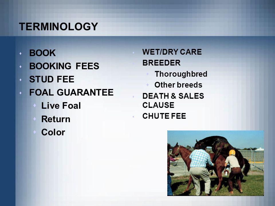 TERMINOLOGY BOOK BOOKING FEES STUD FEE FOAL GUARANTEE Live Foal Return