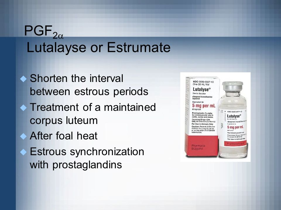 PGF2 Lutalayse or Estrumate