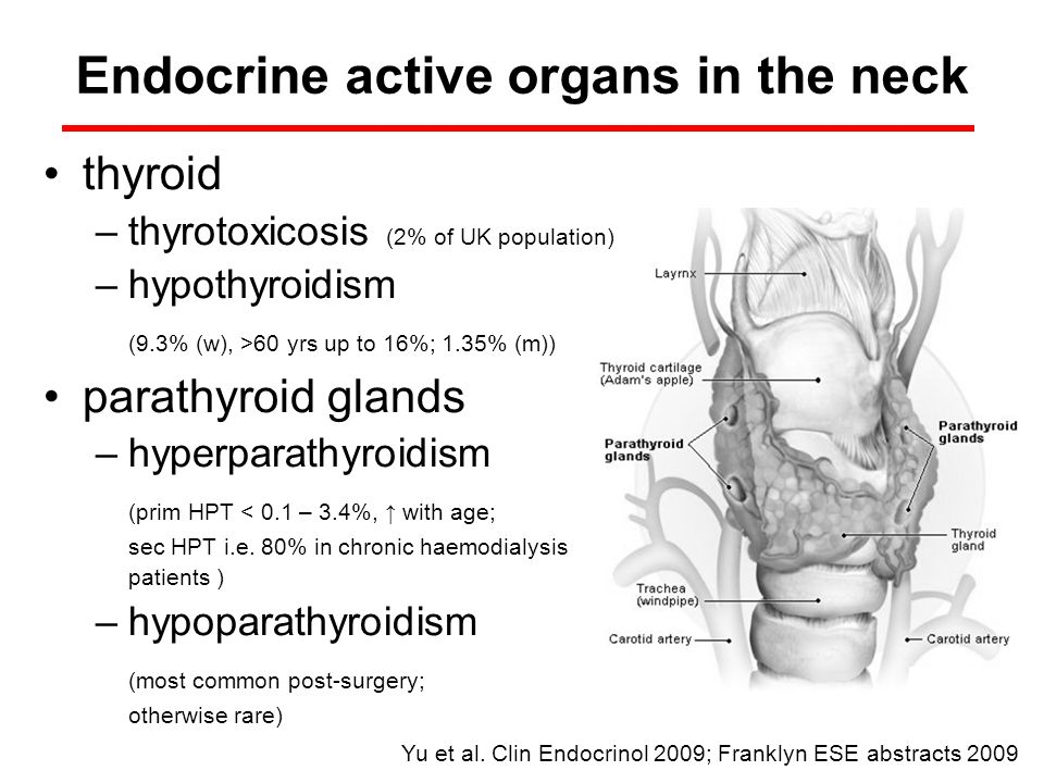 Endocrine active organs in the neck