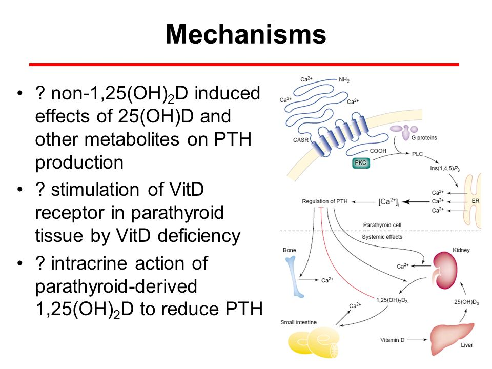 Mechanisms non-1,25(OH)2D induced effects of 25(OH)D and other metabolites on PTH production.