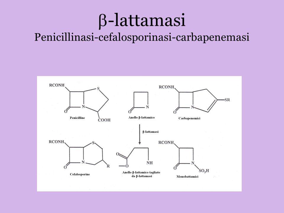 b-lattamasi Penicillinasi-cefalosporinasi-carbapenemasi
