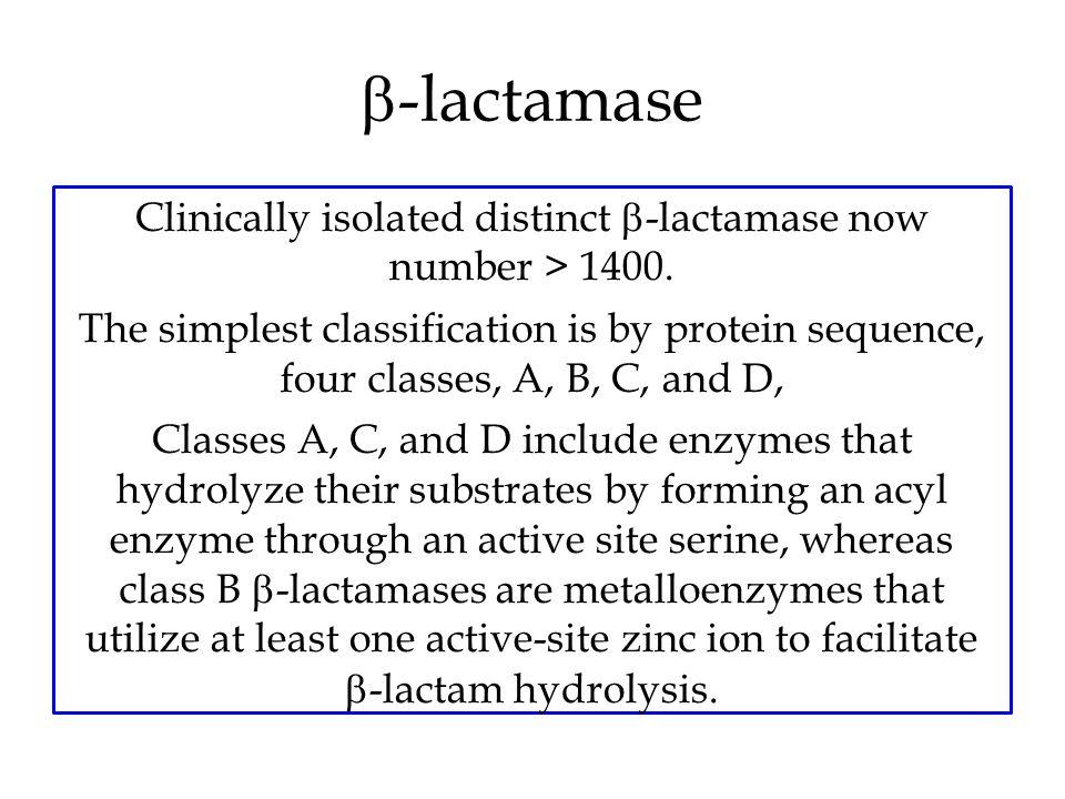 b-lactamase