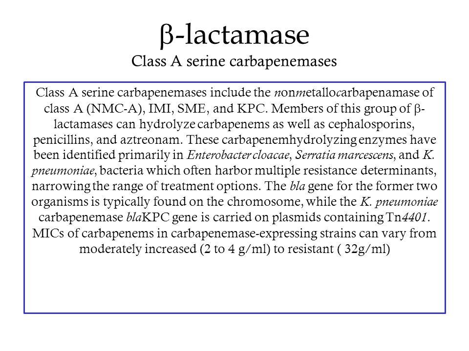 b-lactamase Class A serine carbapenemases