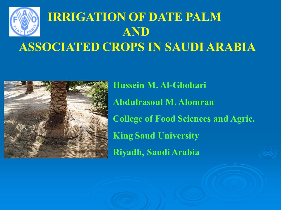 IRRIGATION OF DATE PALM ASSOCIATED CROPS IN SAUDI ARABIA
