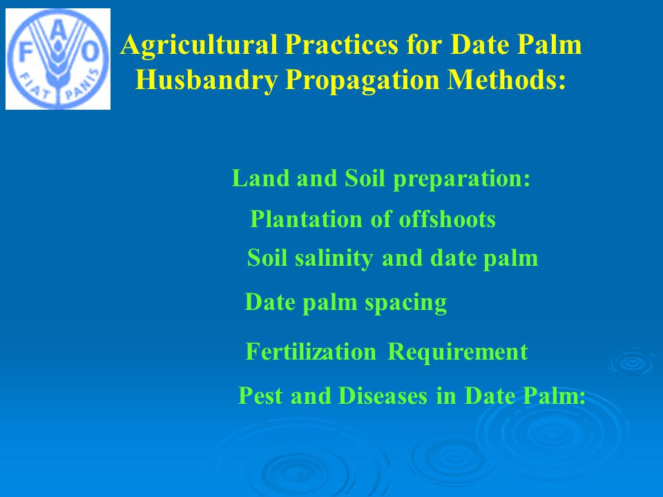 Agricultural Practices for Date Palm Husbandry Propagation Methods: