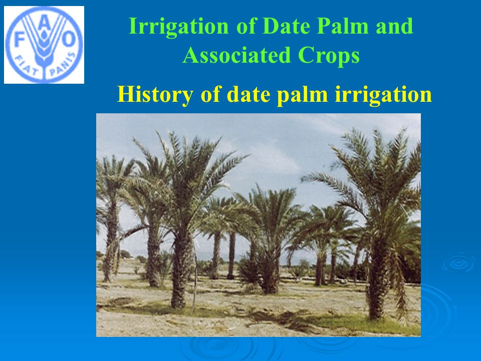 History of date palm irrigation